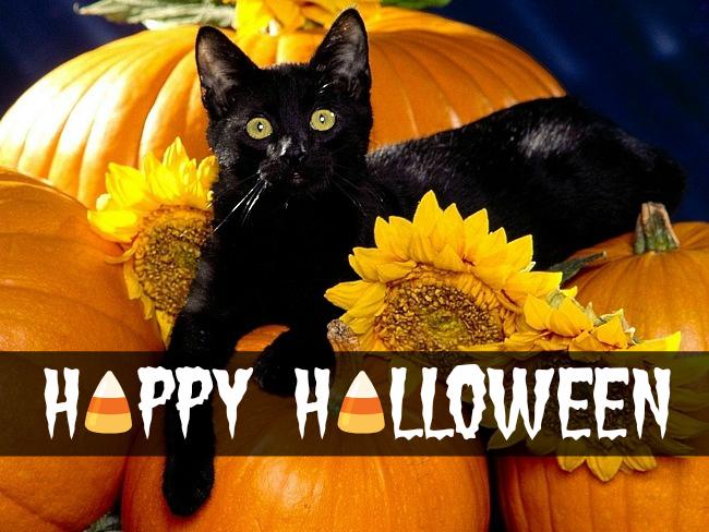 Halloween 2013 Cat Pumpkin Cute Happy Halloween Candy Corn
