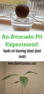 http://www.shareitscience.com/2015/11/grow-an-avocado-hands-on-science.html