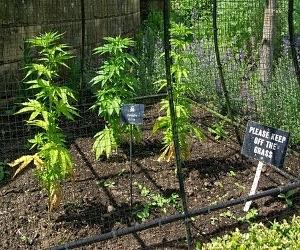 Kebun paling beracun