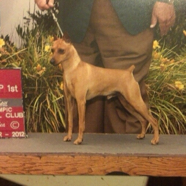 Dog Shows  Lubbock Tx