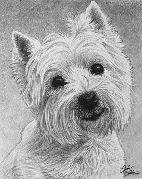 Gallery For gt Realistic Drawings Of Dogs