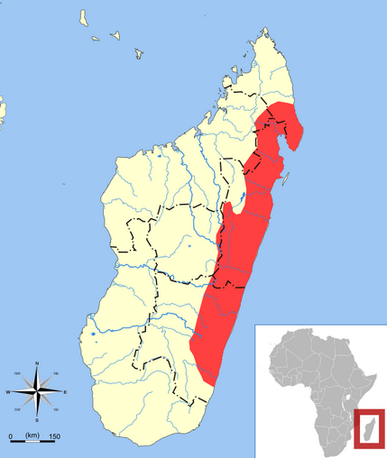 Madagascar, distribution map of Lowland Streaked Tenrec