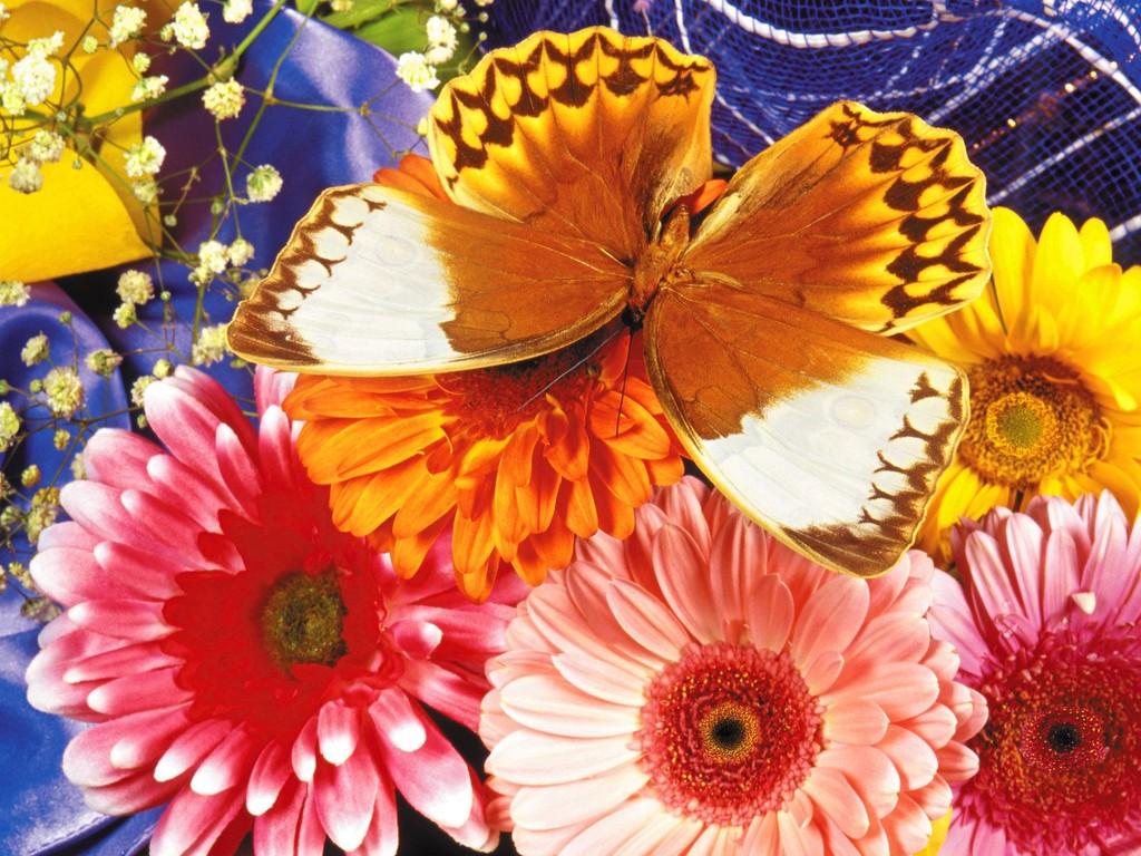 Best Wallpaper Butterfly Barbie - desktop-butterfly-wallpaper  Trends_2902.jpg