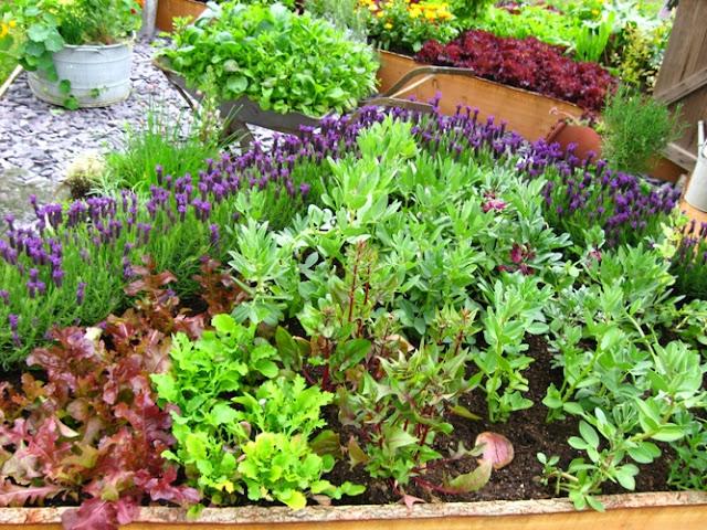 ideias para um jardim lindoIdeias para deixar o seu jardim lindo