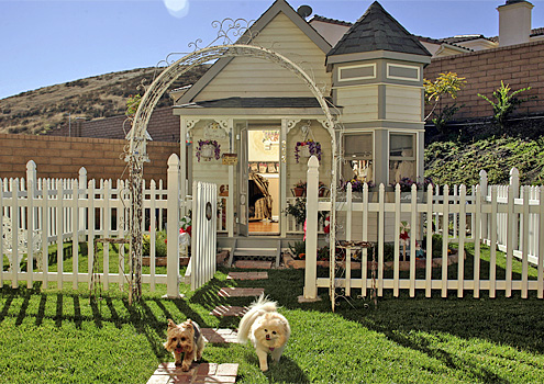 Tammy Kassis Dog House