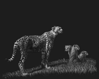 cheetah scratchboard drawing