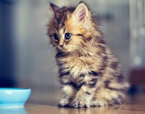 Смешной котенок просит молока