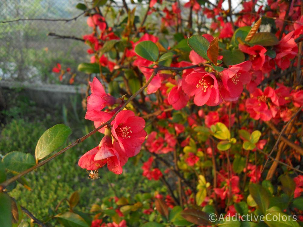 La vita puzza les fleurs du mal for Pianta con fiori rossi