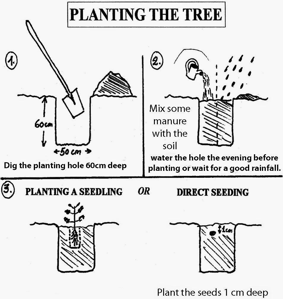 Pemeliharaan Pohon Kelor