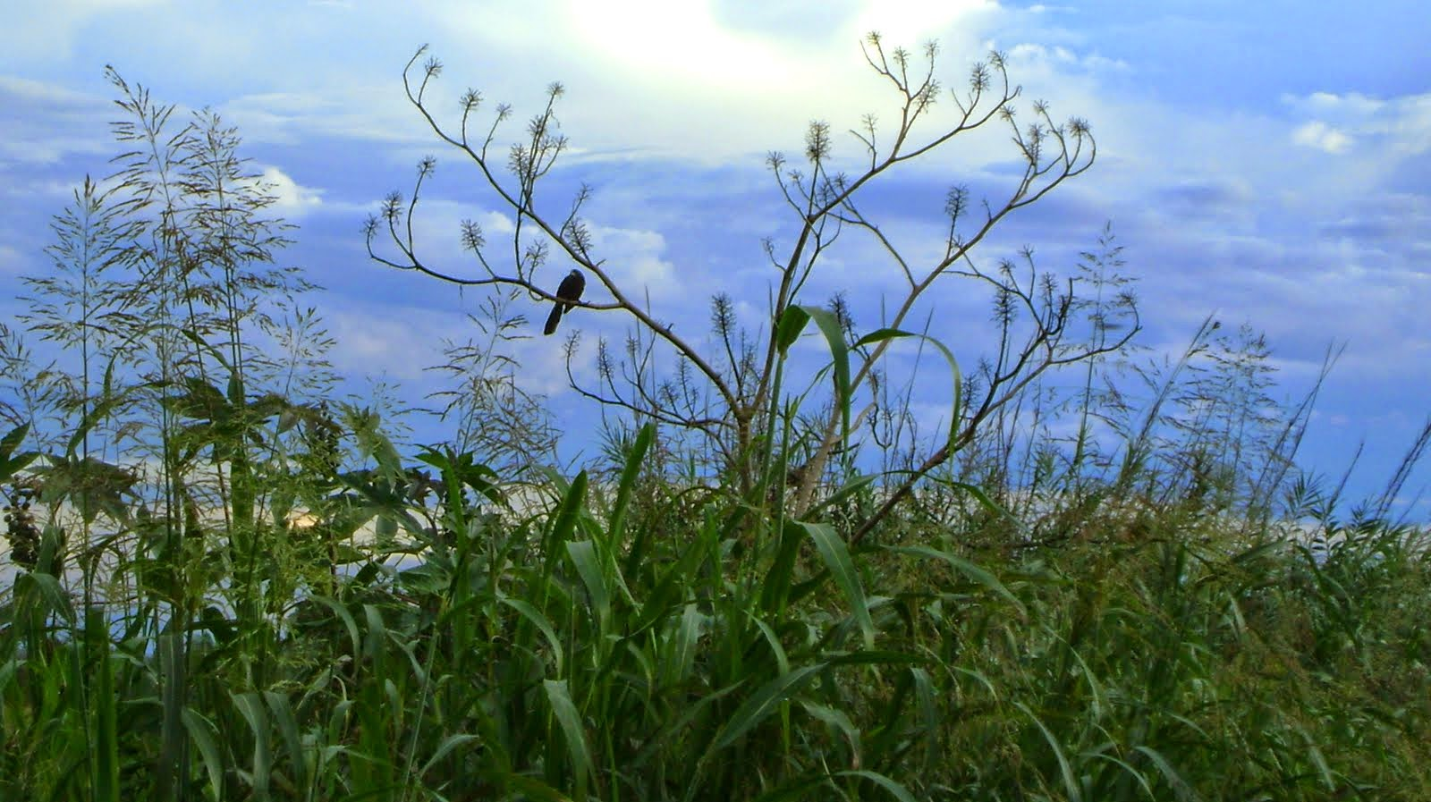Paisaje rural Ecología