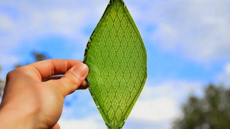 Première Feuille Synthétique pour la Production d'Oxygène