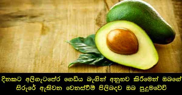 avacado,health news,fitness