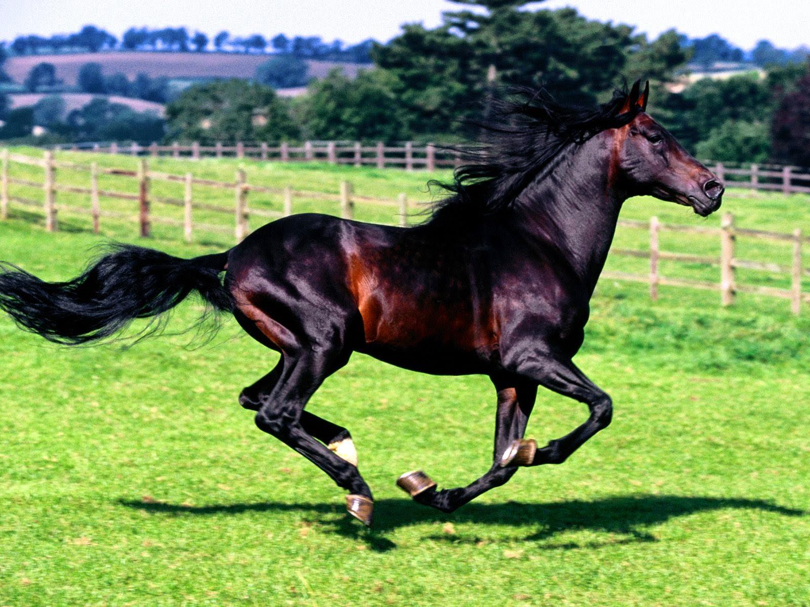 Wonderful   Wallpaper Horse Samsung Galaxy - Horse%2BHD%2BWallpapers%2B(5)  Perfect Image Reference_69532.jpg