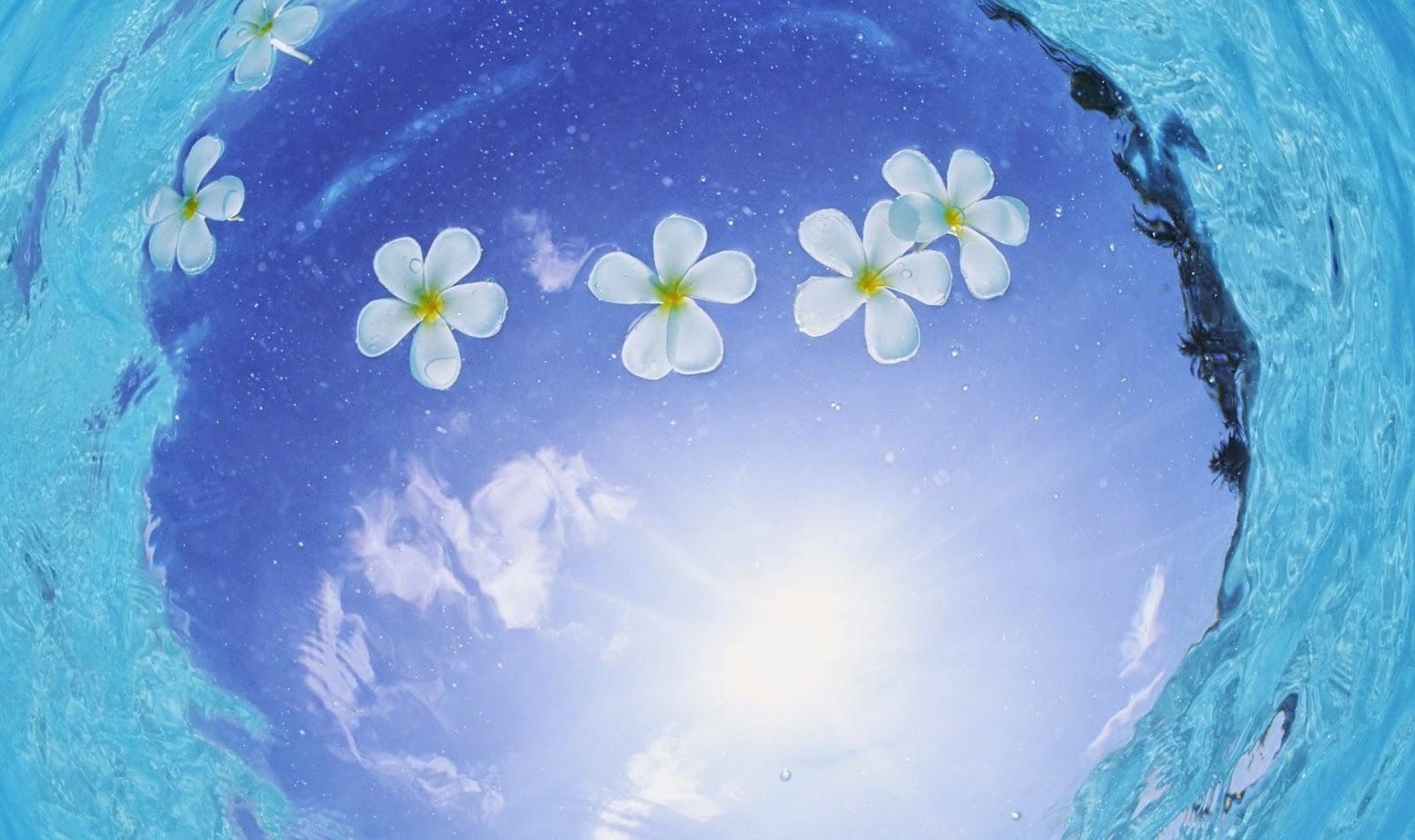 Onderwater wallpaper met bloemen in het water