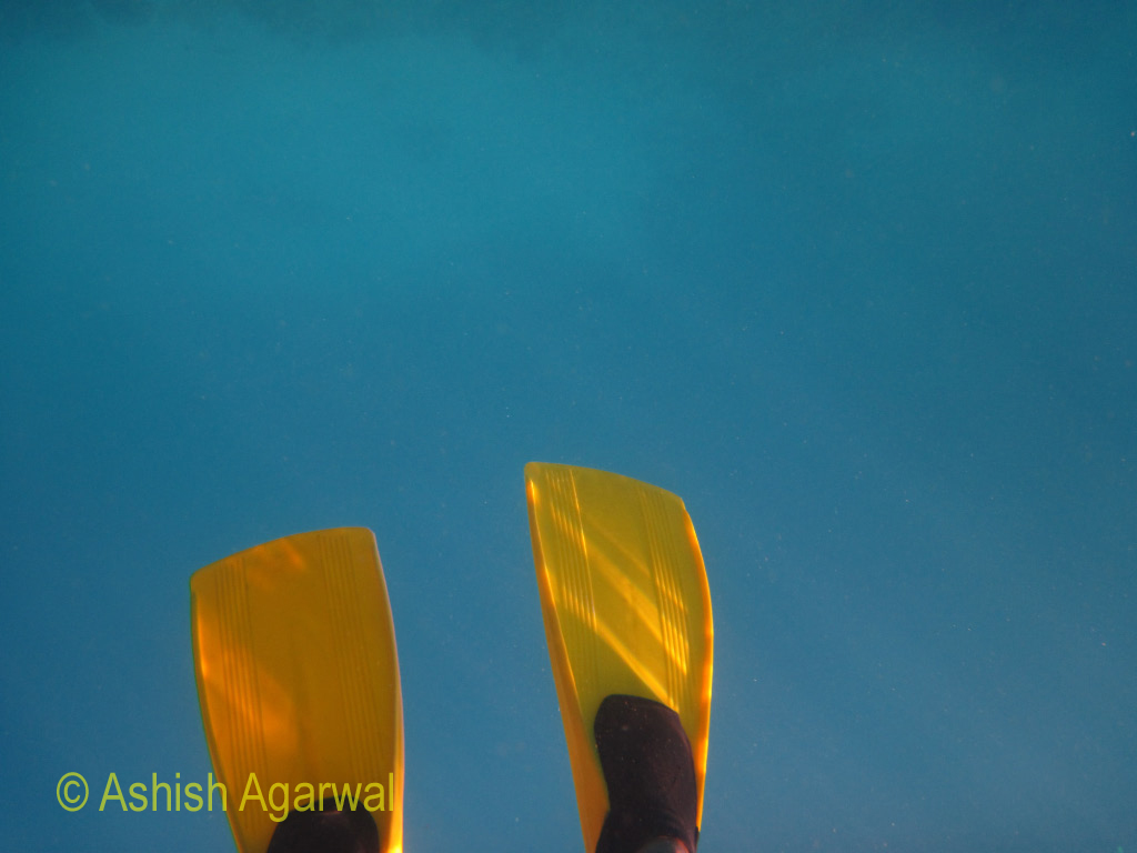 Wearing bright yellow flippers in the Red Sea in snorkeling sites near Sharm el Sheikh