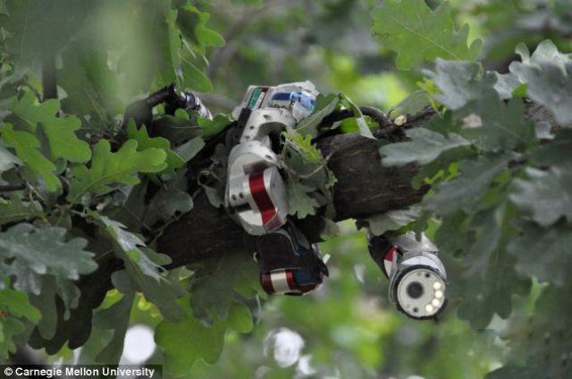 شاهد بالفيديو الروبوت الثعبان جاهز لخدمة الجيش الأمريكي ضد العدو! article-0-18DD0A95000005DC-252_634x421.jpg