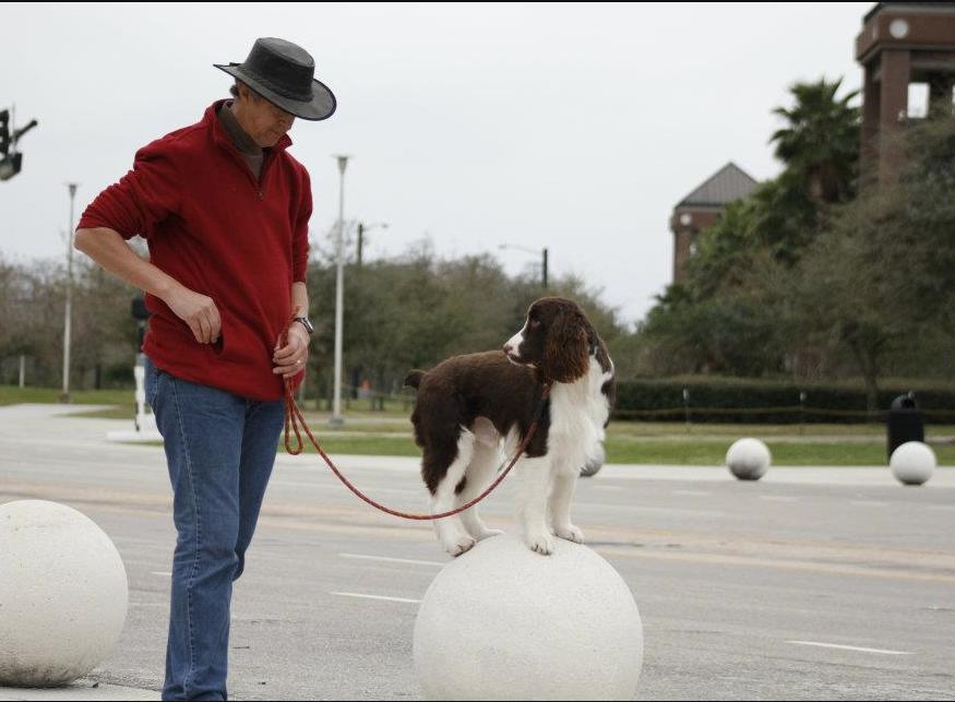 The Doglando Blog Orlando Dog Grooming Orlando Dog Training - 26 dogs puppyhood photos