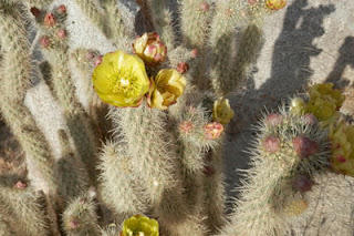Cactus in Bloom, Photo by Kaliani Devinne, Copyright 2013