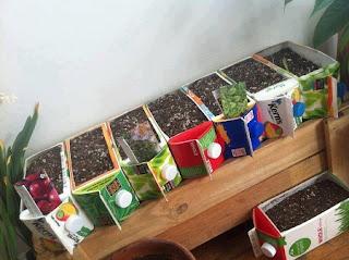 Ideas para Reciclar Tetrapacks, Maceteros Reciclados
