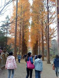 秋天很美~