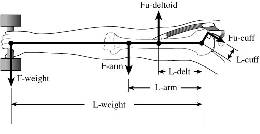 Lever Arm Diagram : Shoulder arthritis rotator cuff tears causes of