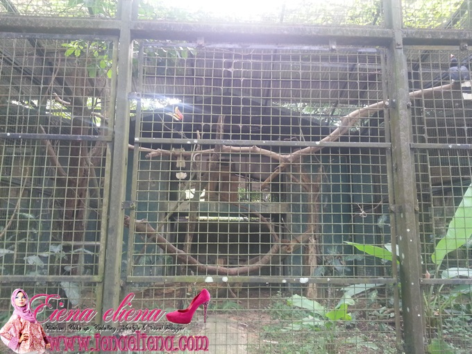 Pusat Hornbill  Zoo Negara