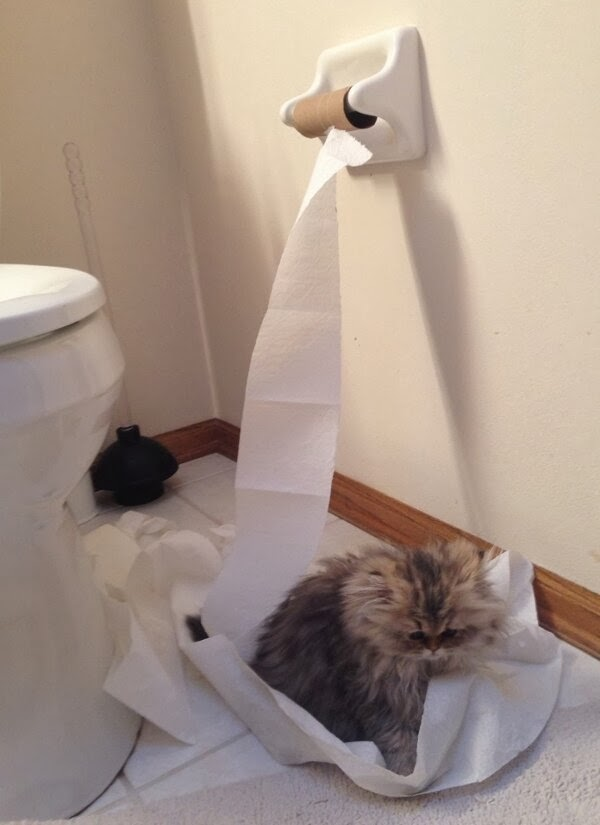 Funny cats - part 89 (40 pics + 10 gifs), cat playing with toilet paper