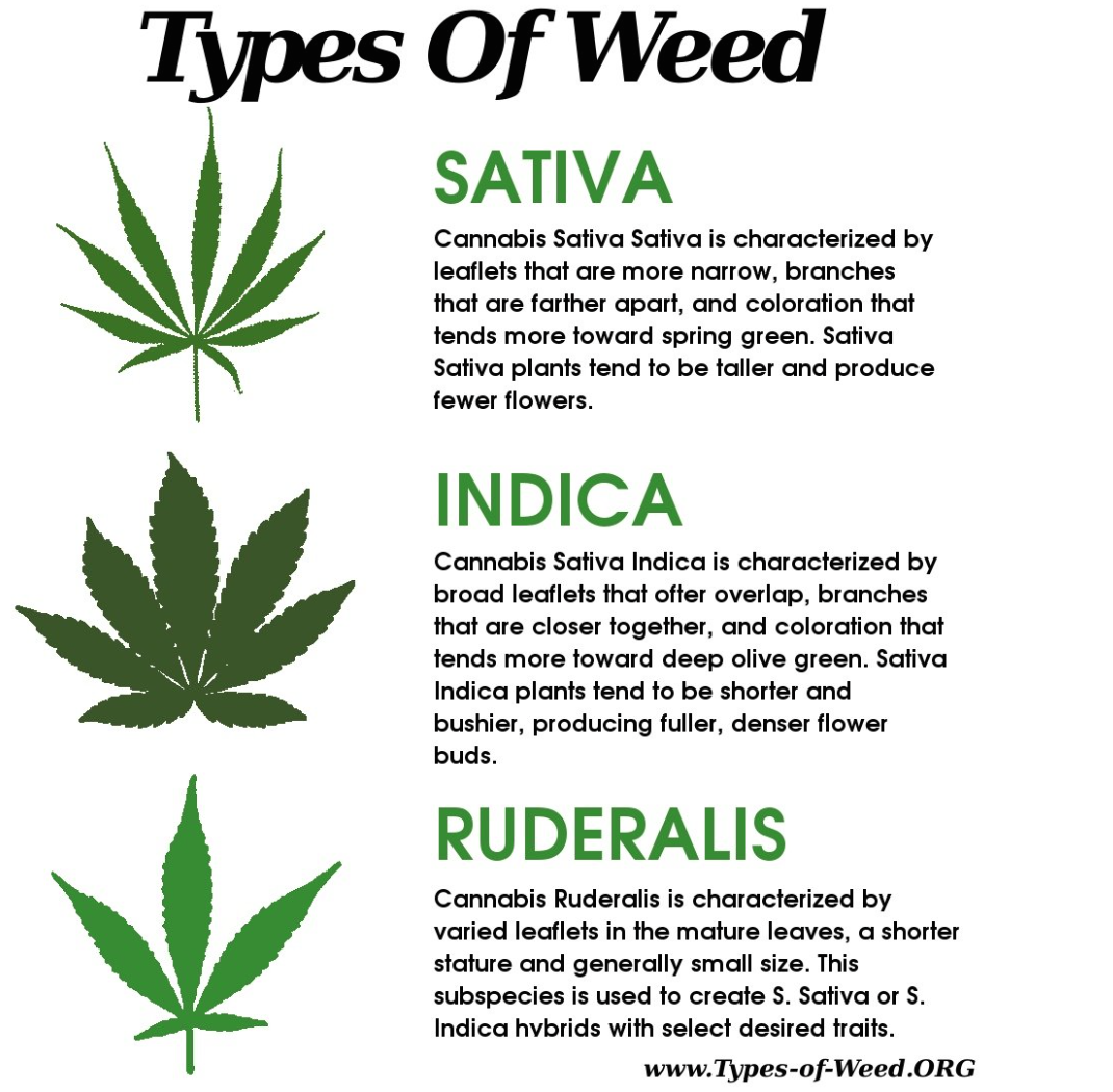 an introduction to the marijuana or cannabis sativia From the asian steppes where cannabis sativa plants first evolved, to prehistoric hunters and gatherers, ancient china, viking ships and finally.