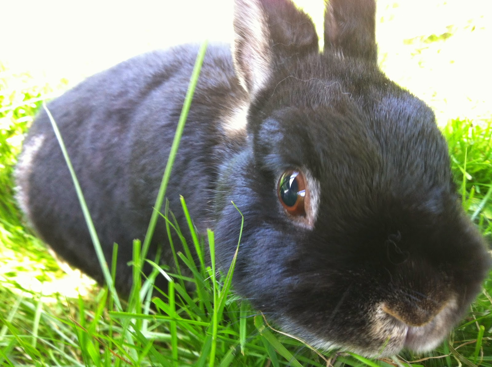 Bebe, rabbit