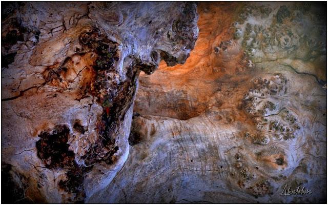 Vida y muerte en el tronco. Abuelohara