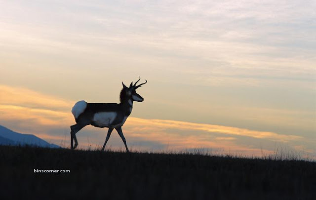 amazing wildlife on the move