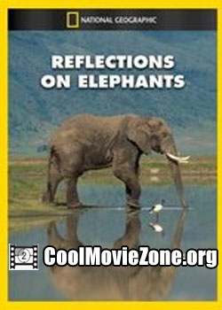 Reflections on Elephants (1994)