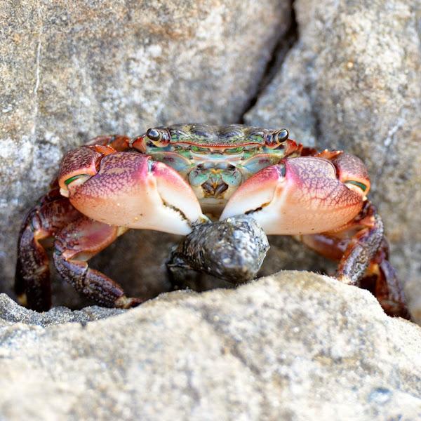U Have Crabs crazy little th...