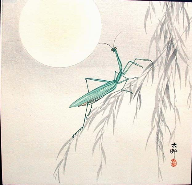 Becky Knaans Blog The True Meaning Of The Praying Mantis A