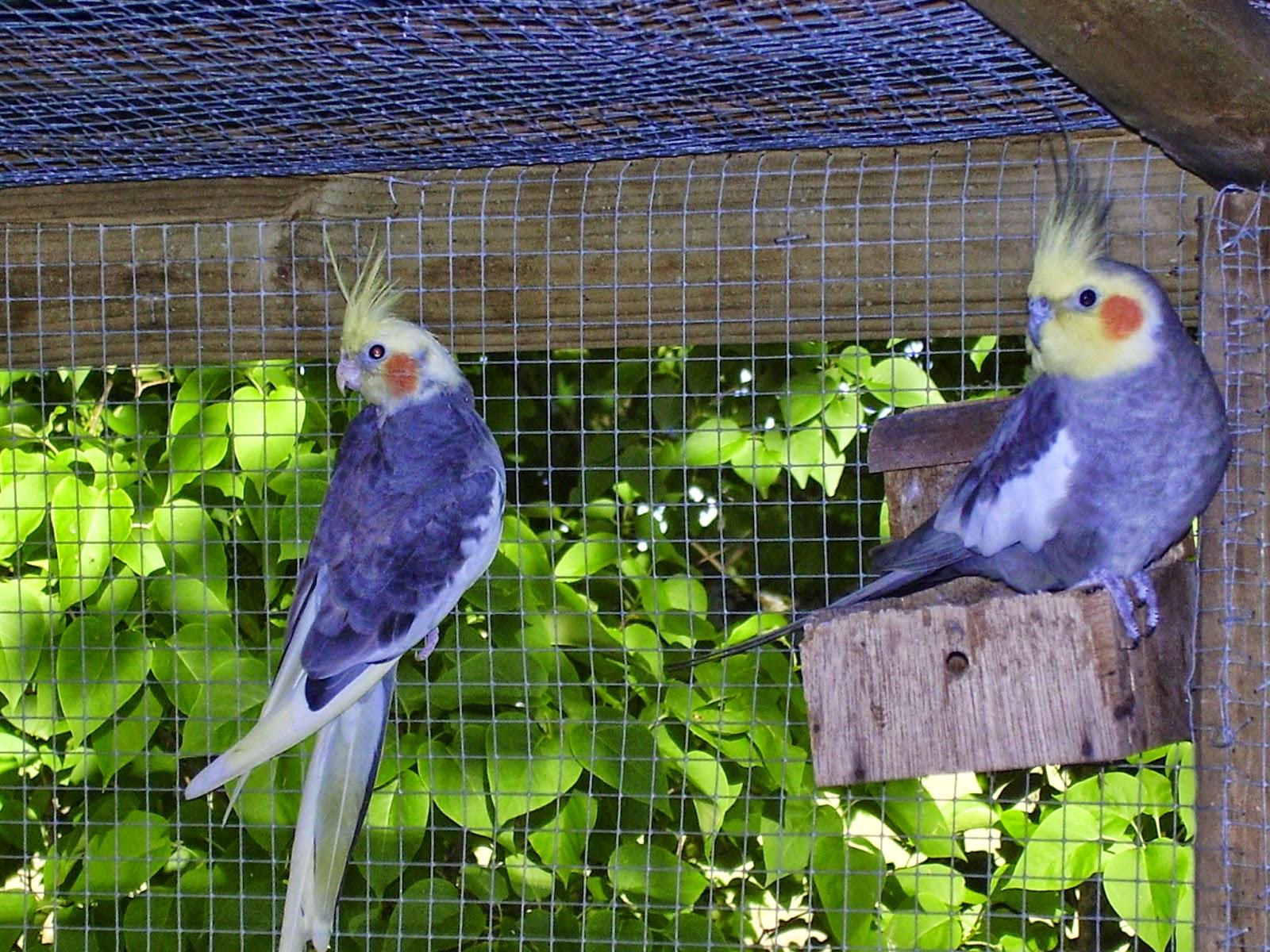 Au gr du jardin la vol 39 hier aux oiseaux envol s for Oiseaux pour voliere exterieure