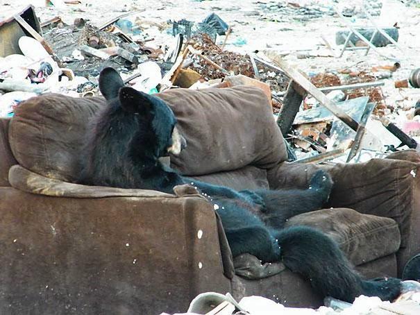 oso descansando en sofa