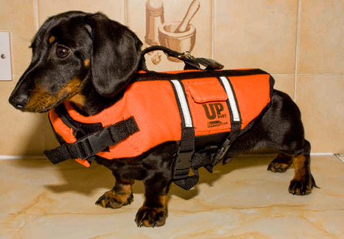 Picture Of A Dachshund Dachshund Life Jacket