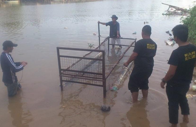 Buaya Dibunuh Dengan Kejam Di Sungai Petagas Sabah