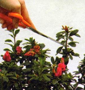 Фото прищипывание цветов