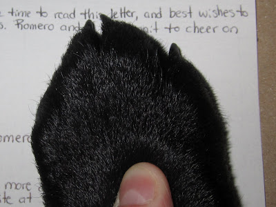 Romero's shiny black front paw is pressed against a sheet of white paper with some small black printing on it. He still has thin little black puppy nails, but his paw is getting pretty big! A thumb is resting on top of the paw, helping to press it down onto the paper to make a print.
