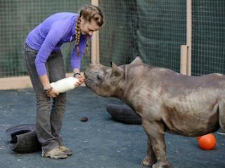 orfanato para rinocerontes