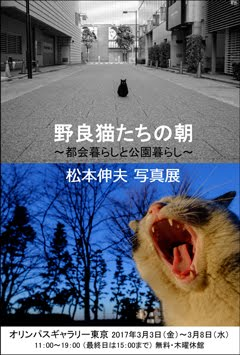 【 ありがとうございました 】<br>松本伸夫 写真展<br>野良猫たちの朝 ~都会暮らしと公園暮らし~
