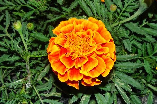 Aprende a cuidar de tu jard n 5 flores resistentes al sol - Plantas que aguantan mucho sol y calor ...