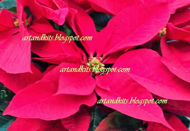 Aqui fica o nosso desejo para o Novo Ano... / Here it stays our wish for the New Year...