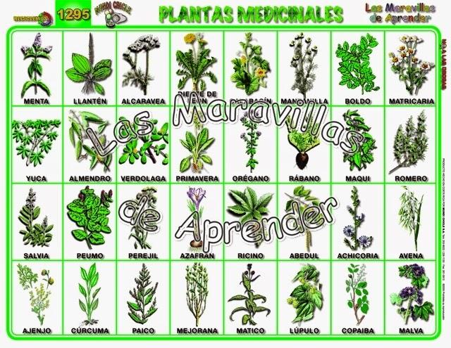 Como tener tu cuerpo sano las 230 plantas medicinales m s for Tipos de hierbas medicinales