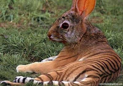 funny_picture_funny_tiger_vandanasanju.blogspot.com