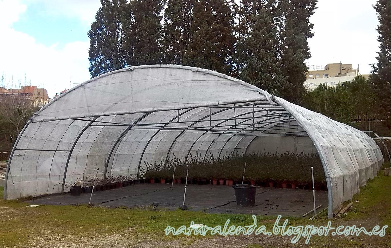 tunel invernadero