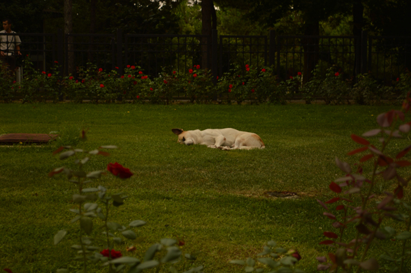 napping time in Istanbul