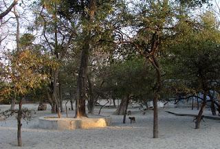 Trees at Tatiya Sthan Vrindava 1