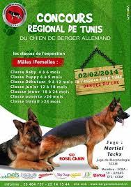 Concours régional de tunis de beauté du chien (Video)